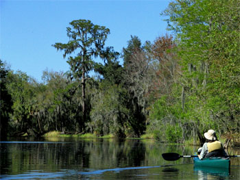 Canoeing-at-Alafia-River-State-Park-350x263