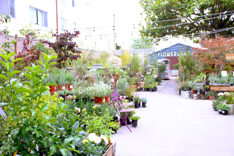 flowerland-local-123-nursery