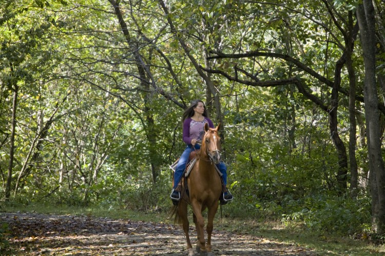 Horseback_Riding_at_New_River_Trail_STate_Park_(8004396549)