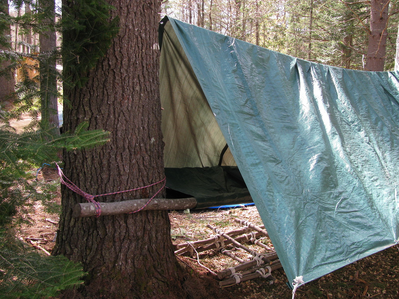 Pole_tarp_and_rope_shelter_4855
