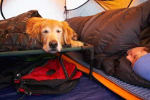 dogs-camping