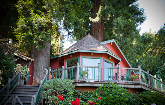 redwood-tree-house