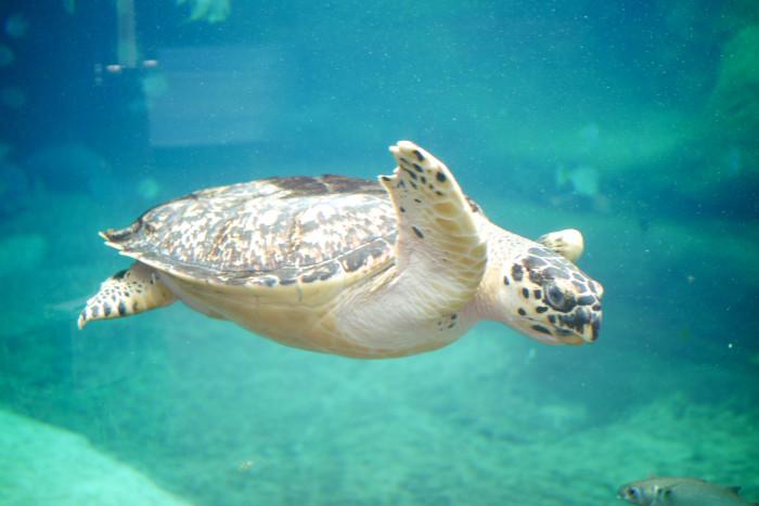 columbus aquarium